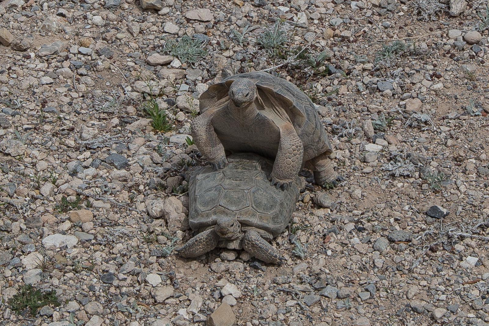 Tortoises are different from turtles. Go endangered species, go!