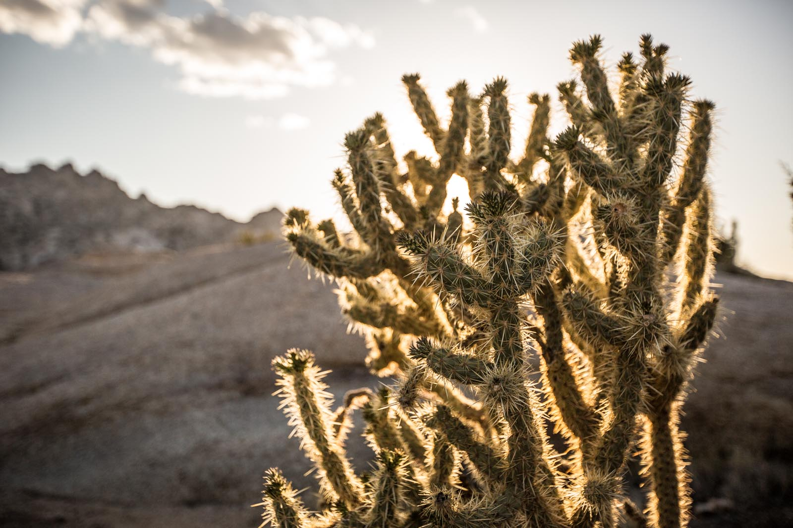 Jumping cholla by our campsite. Apparently this stuff is lethal, but it sure is beautiful -- just don't get too close.
