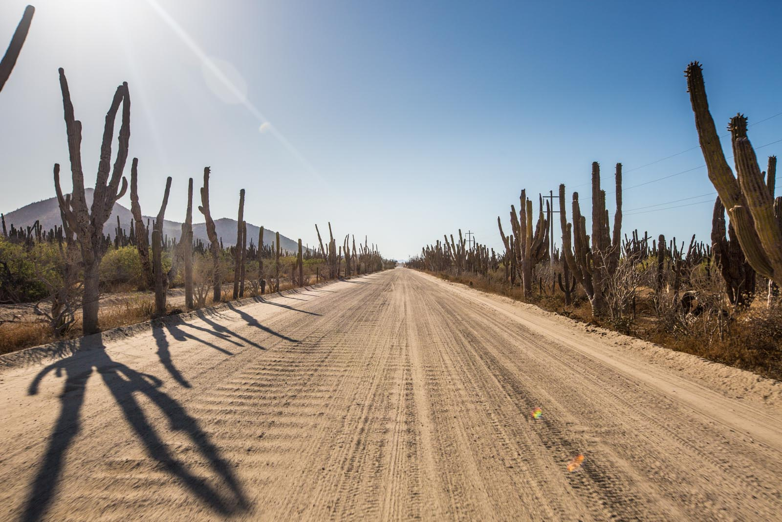 Clench your jaw for this cactus-lined washbaord road down the east cape to  Los Barriles.