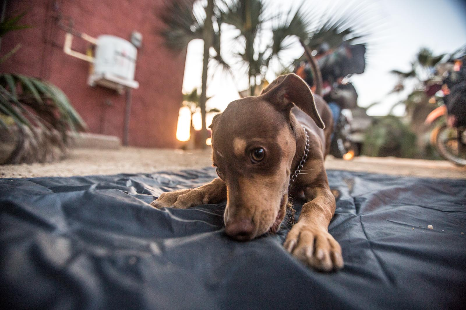 Vato, the little crazed puppy that played with us at the surf camp in El Pescadero.