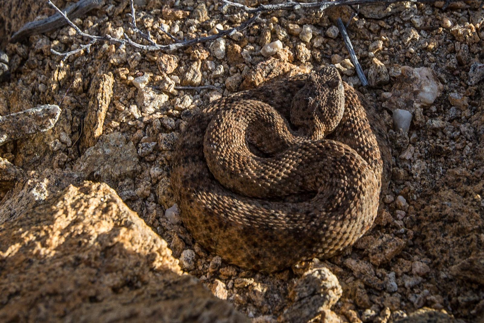 Andrew's first rattlesnake. Good thing he was tiny, cold, unmoving, and super cute!